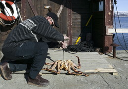 KIRKENESS: KING CRAB  Paralithodes camtschaticus